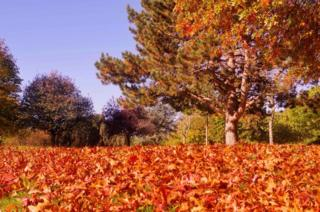 Autumnal coloured leaves on the ground under a tree