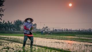 Cultivadora de arroz en Vietnam