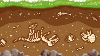 Fossils.