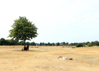 A woman sunbathes on the burnt dry grass on Wimbledon Common in London.