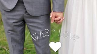 Imagen de una pareja estrechándose la mano, portada de la web Wasp Love.