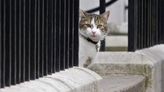 Larry outside Downing Street