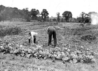 Geoff Stearn and his father in an allotment in Ilford