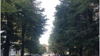 Drvored u centru Beograda