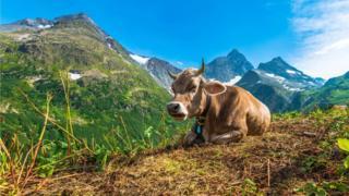 Swiss farming