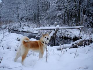 Пес в снегу