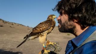 Ariel Marinkovic and his hawk Hook in flight