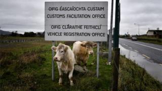 Cows stand beneath a sign for the disused Customs Office along the Irish border