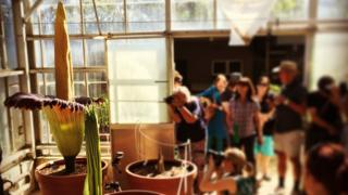 People line up to take pictures of the corpse flower