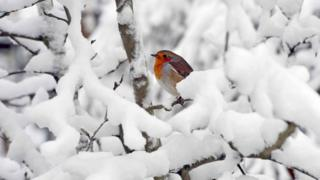 Robin in snow