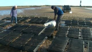 Oyster bed near Spurn