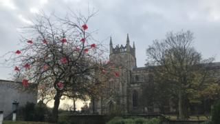 Poppies on a tree in Dunfermline