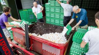 Hollanda'da imha edilen yumurtalar