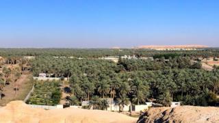 Al-Ahsa oasis in Saudi Arabia