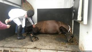 The horse was anesthetised