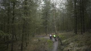 Cannock Chase Forest