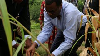 Akinwumi Adesina inspecting crops (Image: World Food Prize)