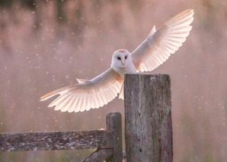 Technology Owl landing on a gate post