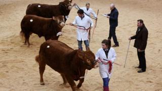 Stirling Bull Sales