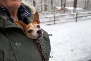 A dog wrapped up in the coat of a man