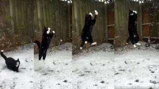 Кіт і сніг