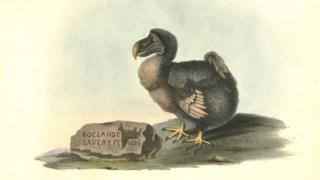 Illustration of a Dodo