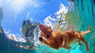 Действительно ли большинство млекопитающих могут инстинктивно держаться на плаву и плавать по-собачьи?