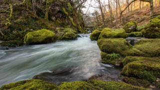 River running through Welsh woodland