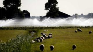 Hollanda'nın Castricum bölgesinde sulanan bir alan