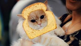 Кіт у хлібі