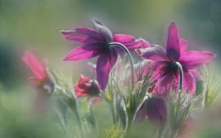Flores púrpura iluminadas por los rayos del sol.