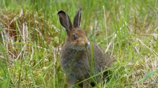 Rescued hare