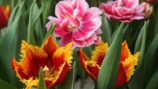 Квіти