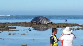 Efforts are underway to remove the carcass of a beached whale on a Cape Town beach.
