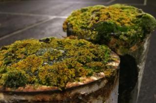 Moss on rusty bollards