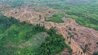 Endonezya'da palm yağı üretimi için kesilen ormanlar