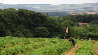 Fruit pickers in Northumberland