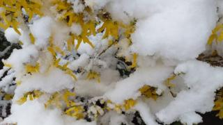 Квіти у снігу
