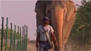 лікарня для слонів