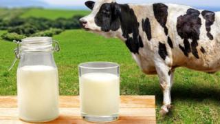 Бутылка молока на фоне коровы