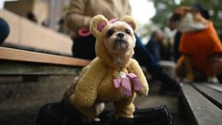 dog dressed up as teddy bear