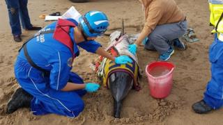 Stranded dolphin and rescuers