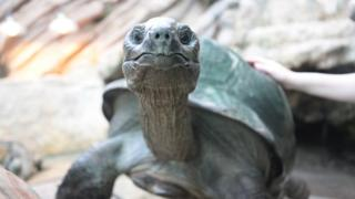 Giant tortoise called Biggie