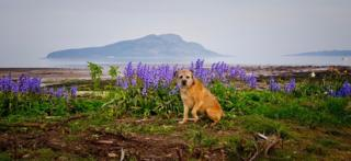 Dog surrounded by flowers