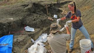 Robert DePalma(L)and field assistant Kylie Ruble(R) excavate fossil