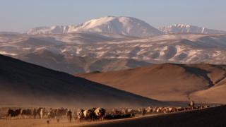 вид на горы и стада