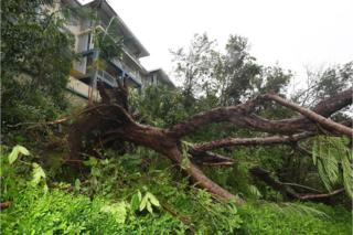 A fallen palm tree lies next to a building at Airlie Beach, Queensland, Australia, 28 March 2017