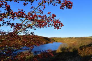 Red berries in front of moorland grasses