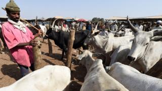 A herdsman stands beside herds at a cattle market (File photo)