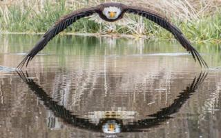 Photographer 'overwhelmed' by response to bald eagle picture